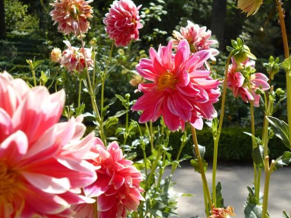 Jardin botanico madrid madridea violeta_de_pereda 2